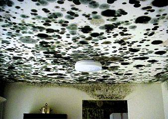 How To Get Rid Of Black Mold On Walls mold in house on walls, ceiling, windows, how to remove, causes